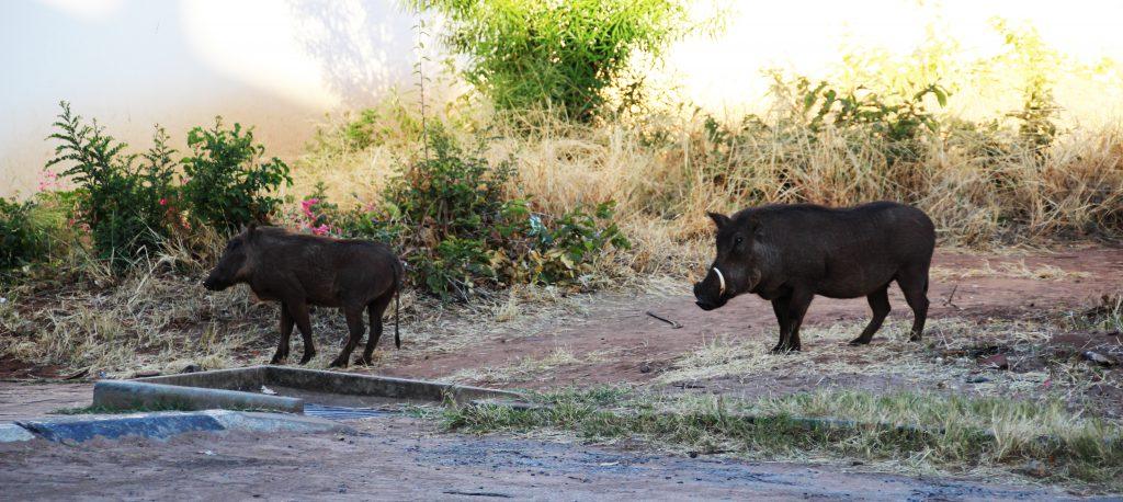 Simbabwe, Afrika