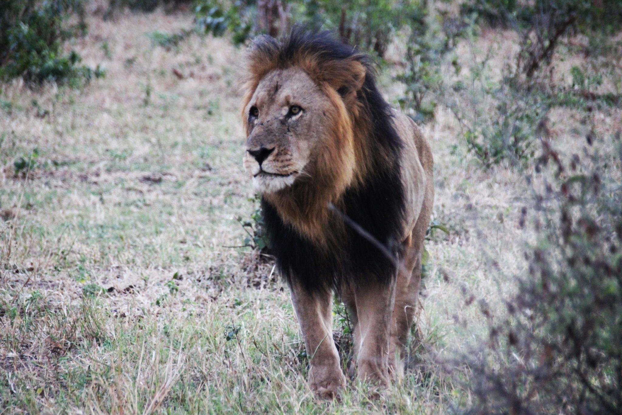 Botswana, Afrika