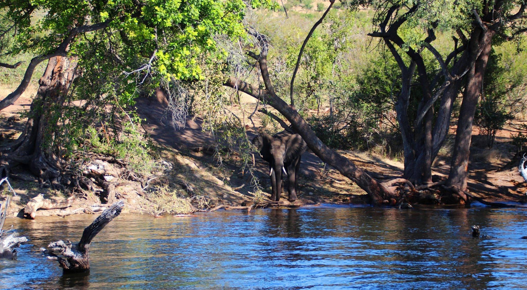 Safari Reise