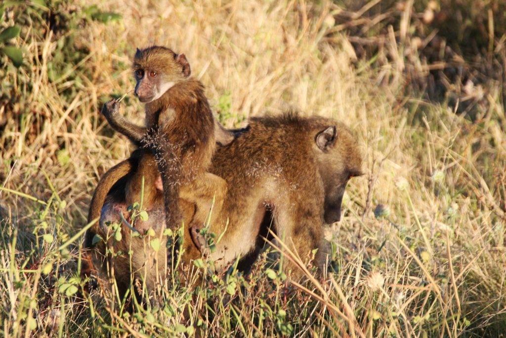Khasane, Botswana, Afrika