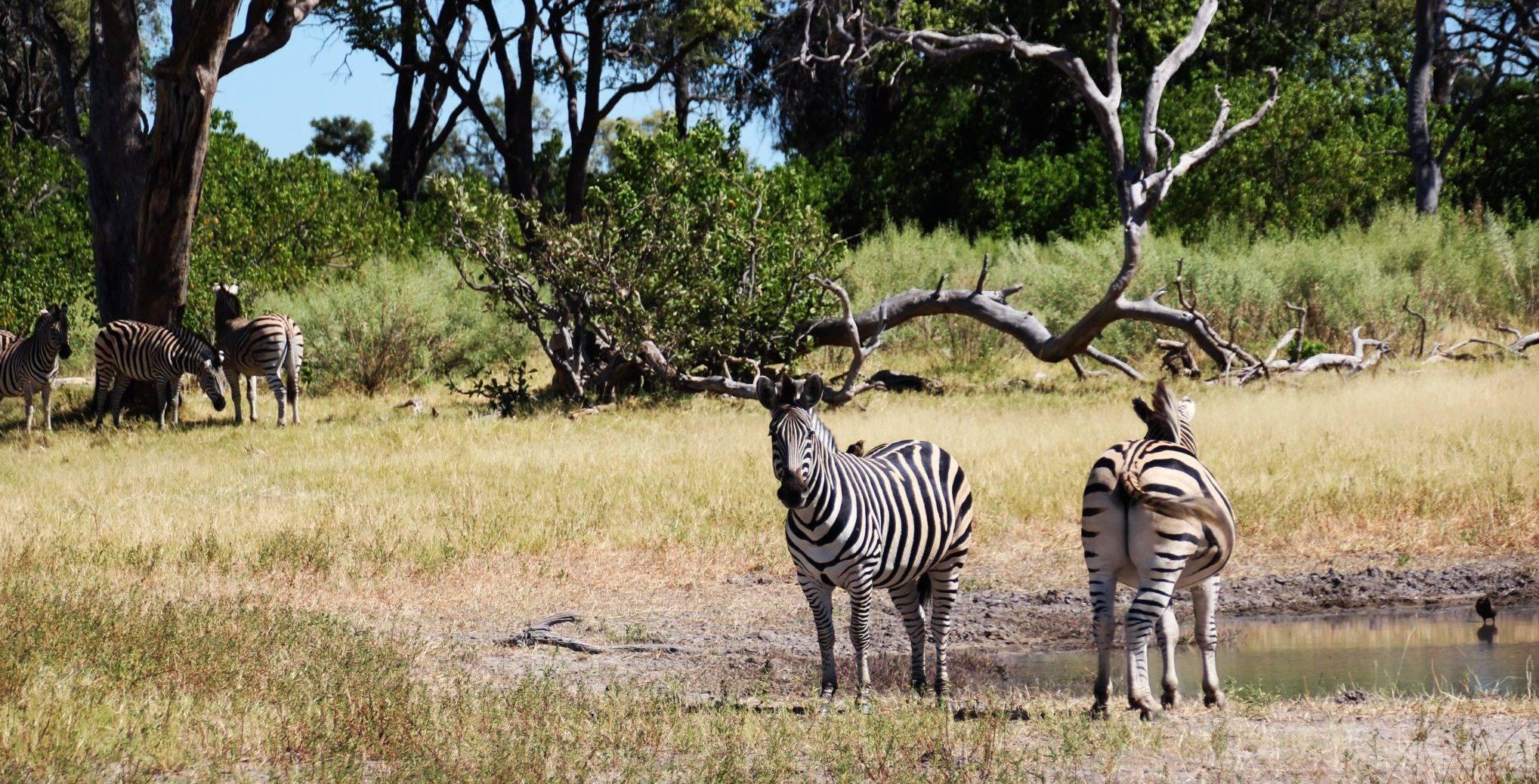 Afrika, Botswana