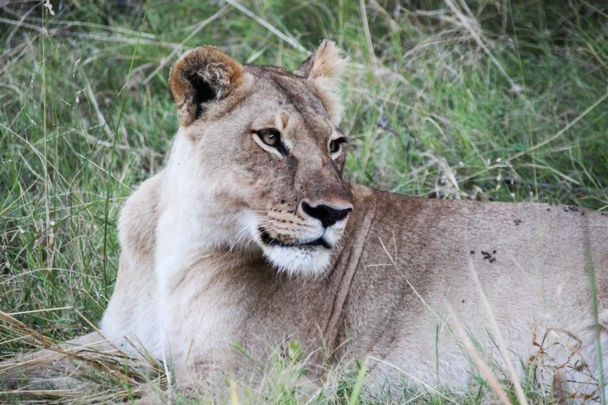 Reise durch Botswana