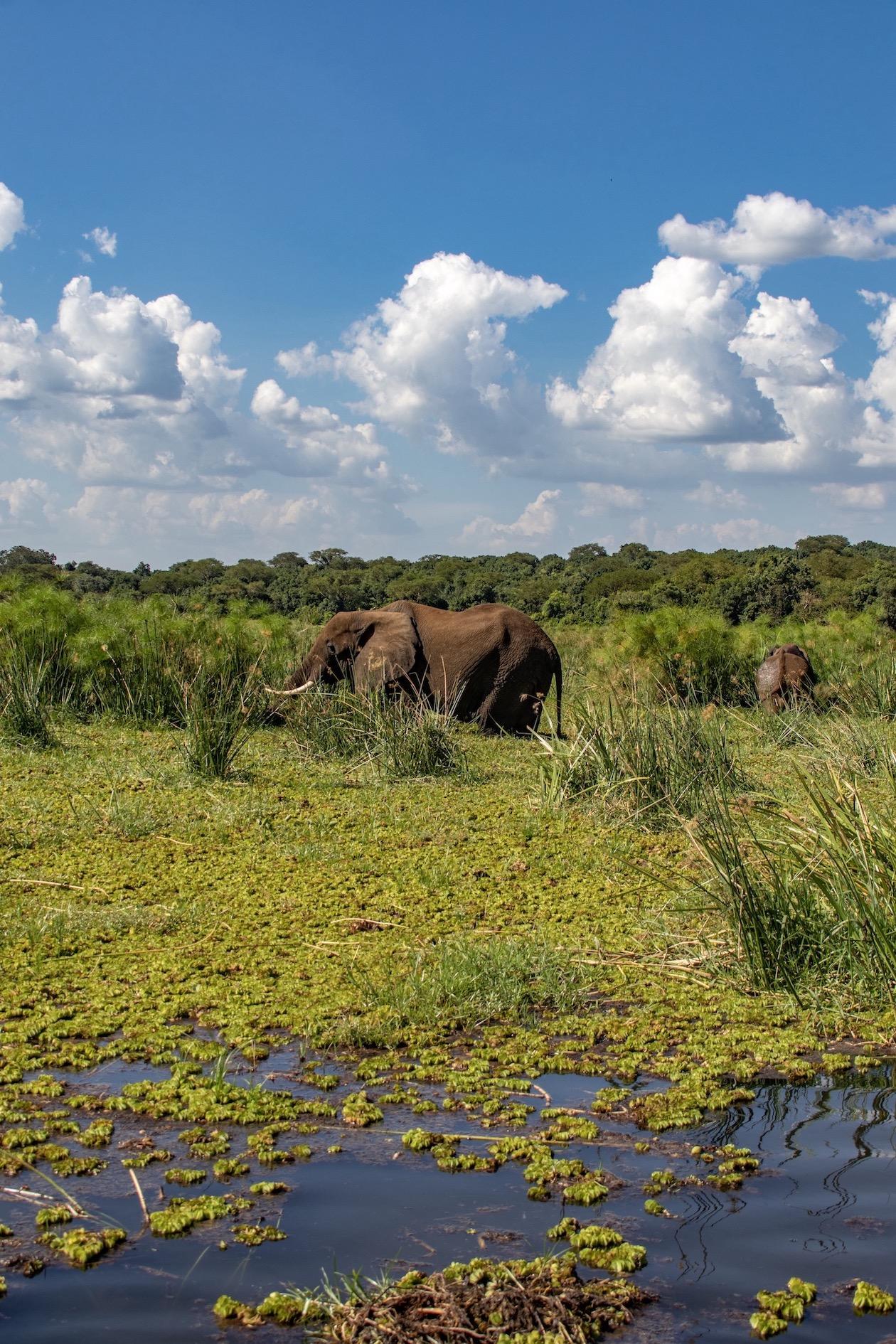 Uganda Nationalparks