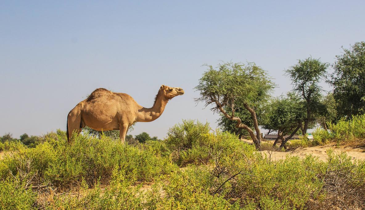 Oman Sehenswürdigkeiten