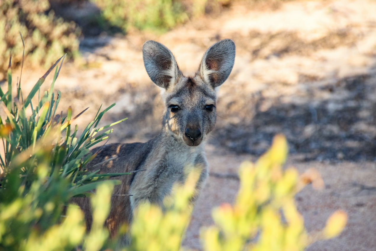 Westaustralien Sehenswürdigkeiten