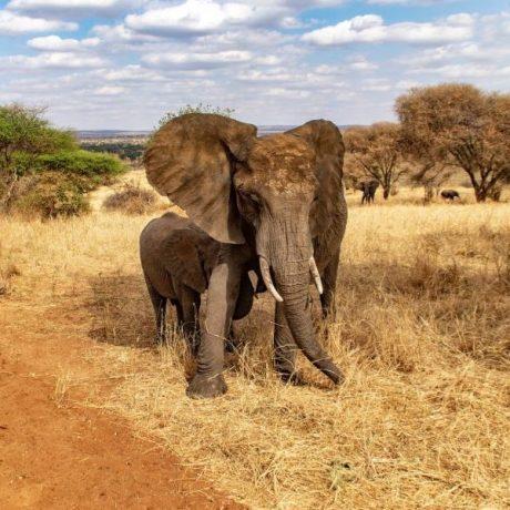 Reiseziele in Afrika