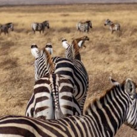 Tansania Nationalparks